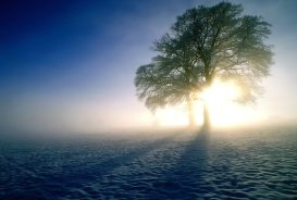 Winter Dawning Inspirations Snow Sunlight Wintr Sky Wallpaper Pictures Free